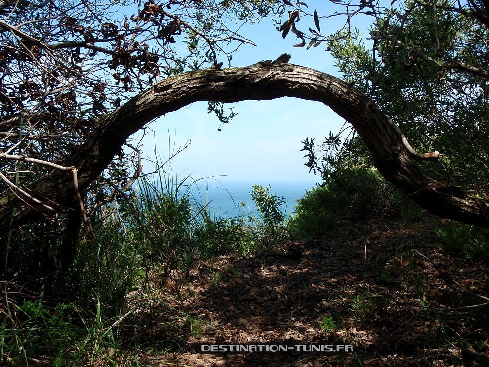 Un arbuste barre le sentier au dessus de Korbous