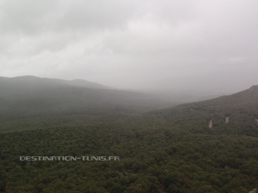 Collines et forêts, dans la brume