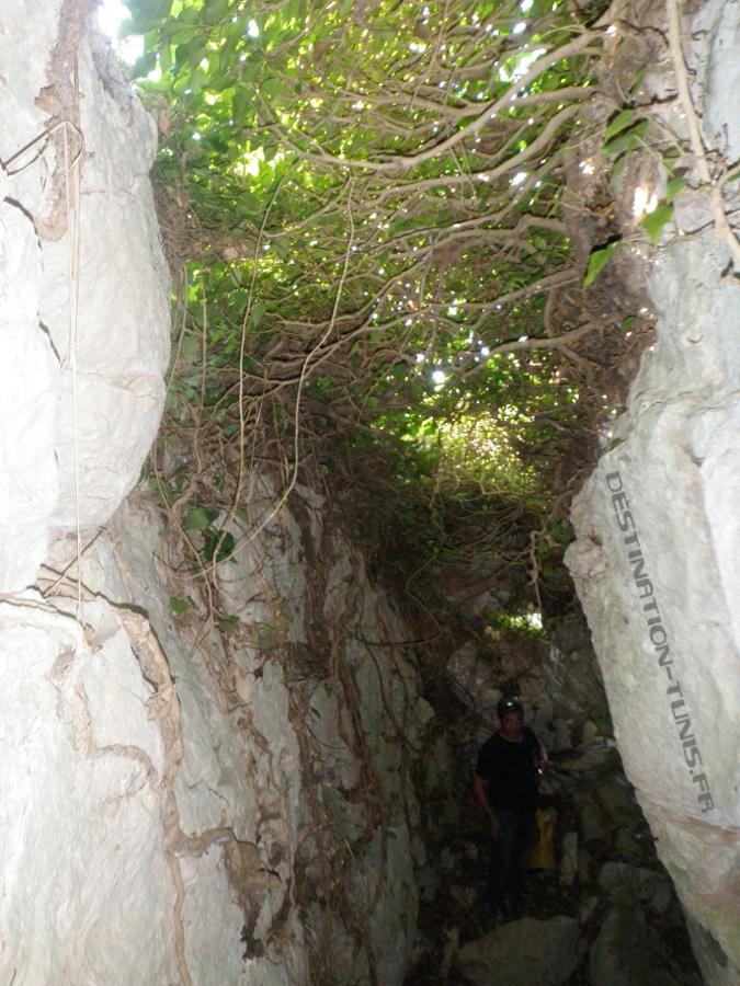 Début de la descente dans une faille sous le couvert végétal