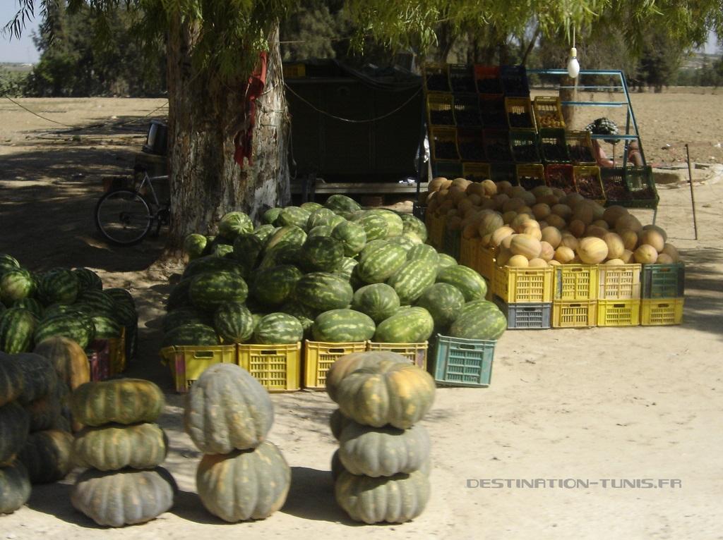 Vente de pastèques, melons et courges en début d'été vers Kairouan.