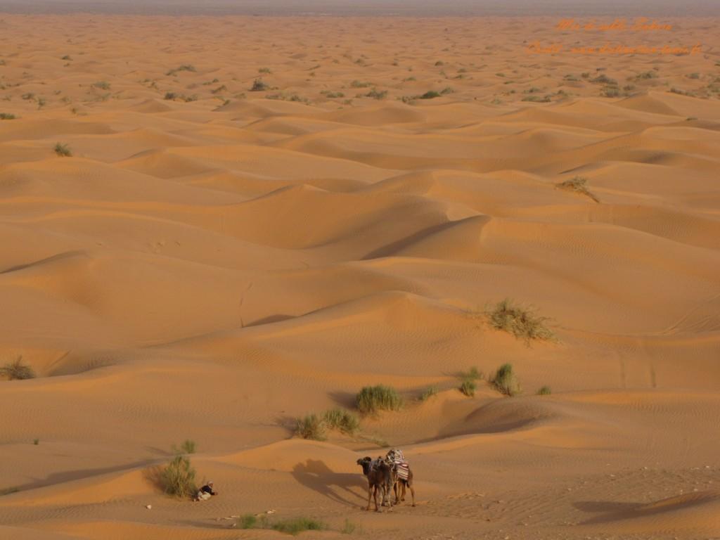 Fond d'écran Désert Mer de sable Sahara Tunisie