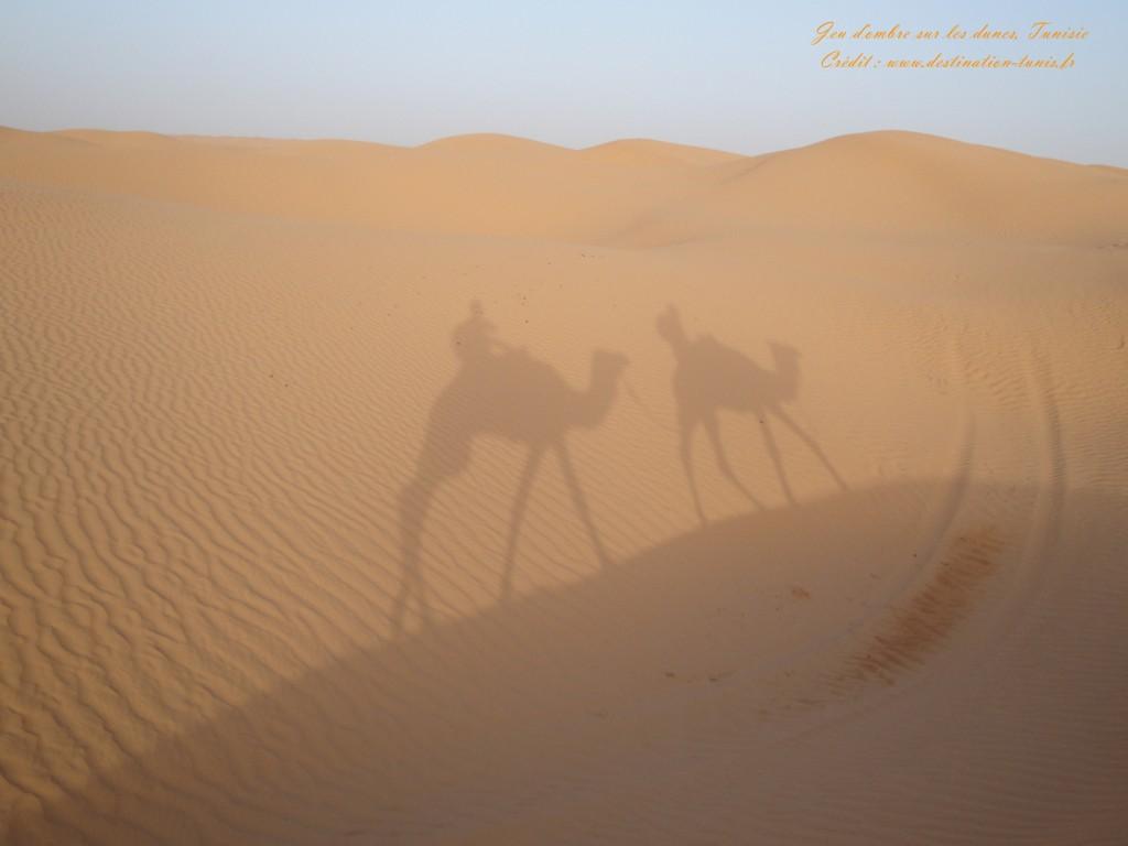 Fond d'écran Désert Jeu d'ombre sur les dunes Tunisie