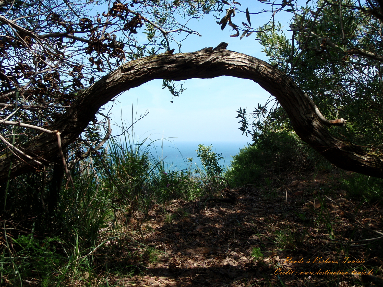 Fonds d'écran Montagne et Nature de Tunisie Rando Korbous Tunisie