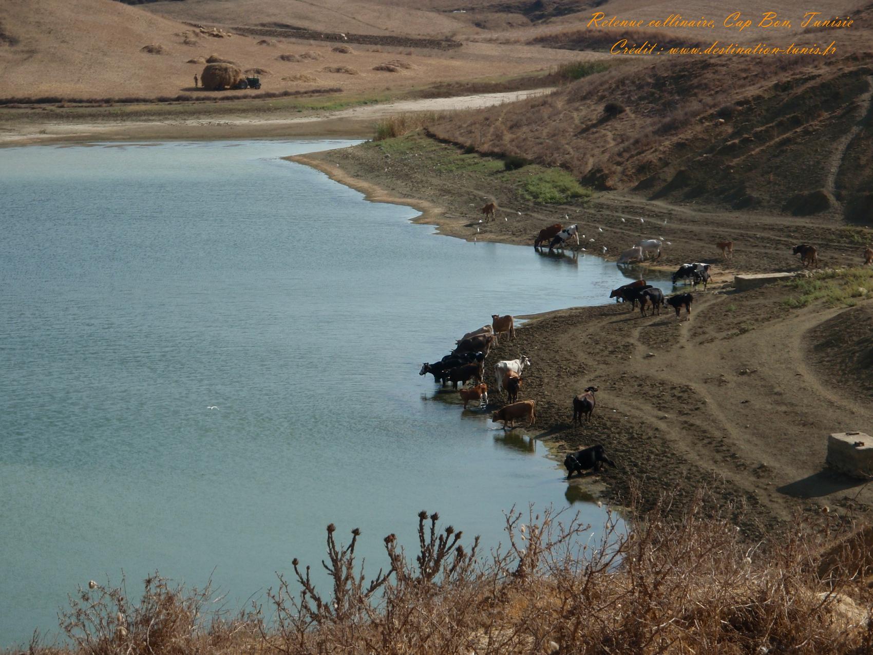 Fonds d'écran Montagne et Nature de Tunisie Retenue collinaire Cap Bon Tunisie