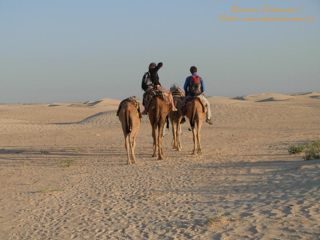 Fond d'écran Désert Traversée du désert en dromadaire Tunisie
