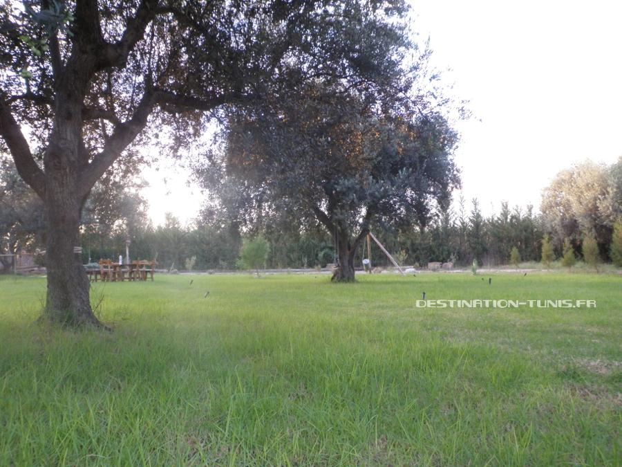 Moment de détente sous un olivier de l'écoferme de Mornag