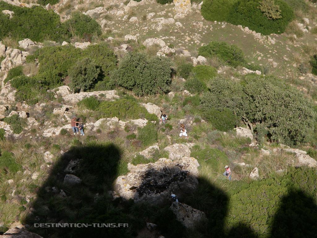 Grimpée dans les broussailles