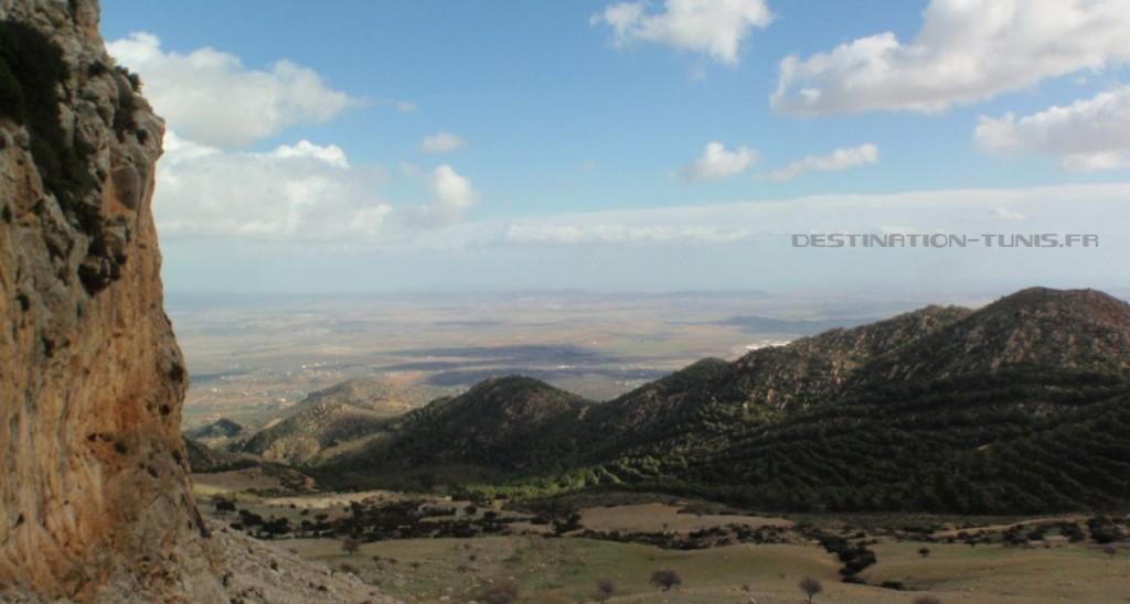 Une montagne voisine, plantée de pins d'Alep.
