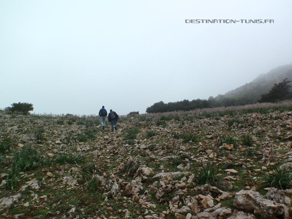 Plateau désertique du Djebel Bargou