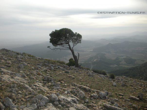 Arbre courbé par le vent, à proximité de l'entrée du gouffre Bir Ennadour