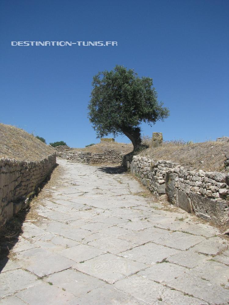 Une ruelle, avec l'ombre bénite d'un olivier !