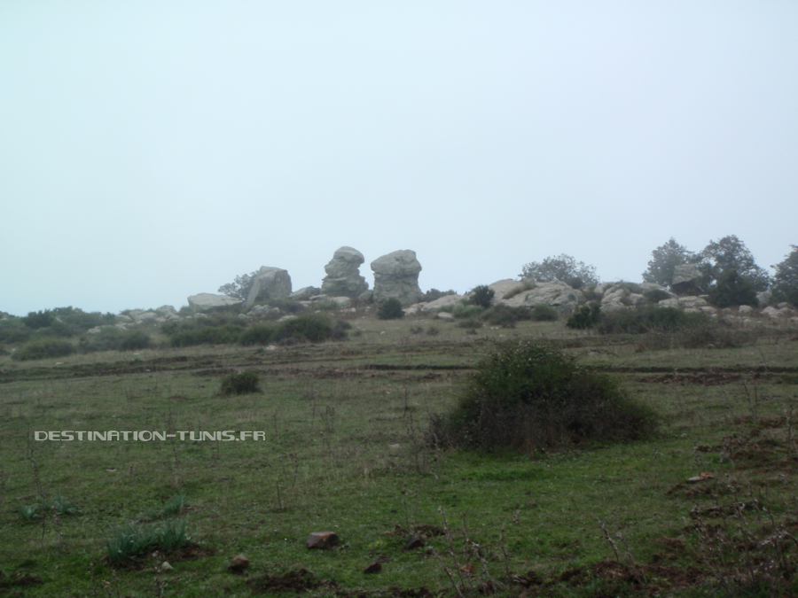 Champs d'herbe rase. Au fond, de gros blocs de pierre, cachés sous la brume.