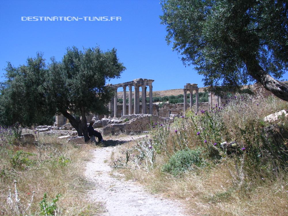 Le Temple de Caelestis au milieu des oliviers. On remarquera la présence d'un guide/berger/gardien à l'ombre de l'olivier !