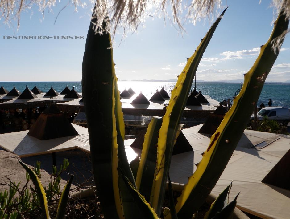 Une terrasse à Hammamet