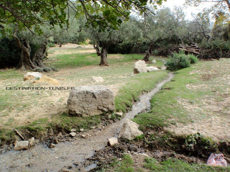 Terrasses d'oliviers et caroubiers, avec un petit filet d'eau qui les traverse.