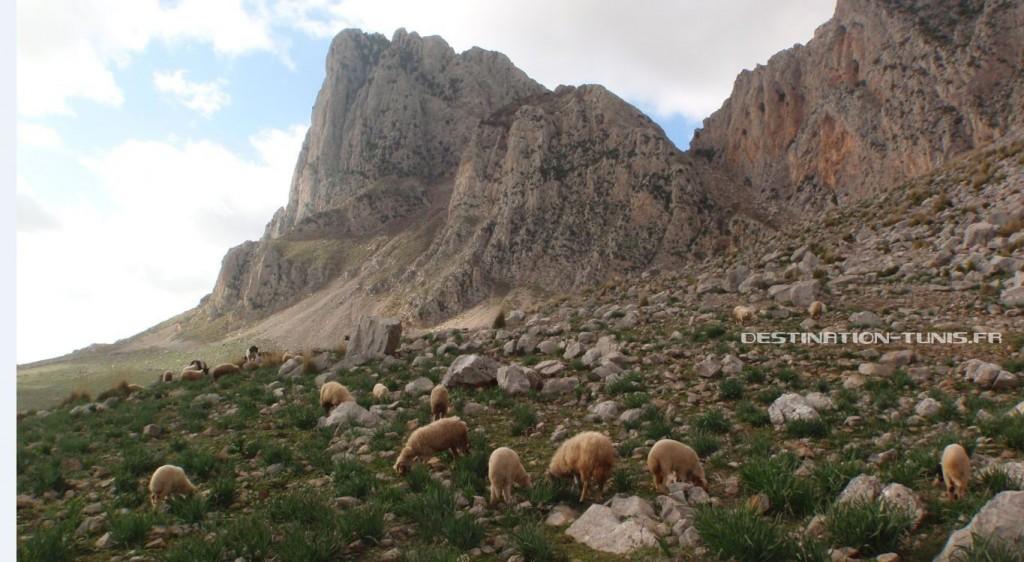 Un troupeau sous le Grand Pic.