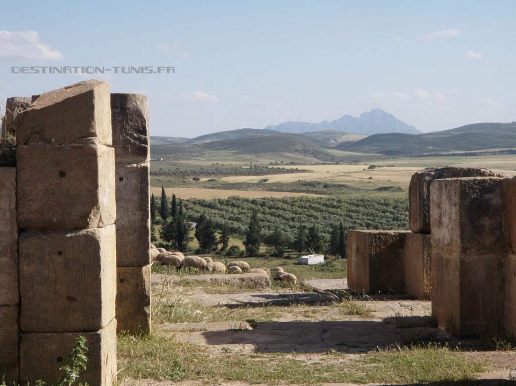 La plaine agricole et le djebel Zaghouan en toile de fond