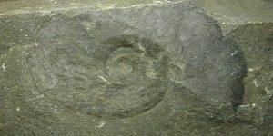 Fossile Tunisie