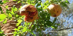Informations utiles en Tunisie : les fruits et légumes de Tunisie